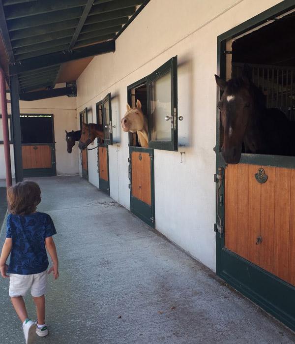 saludando-a-los-caballos